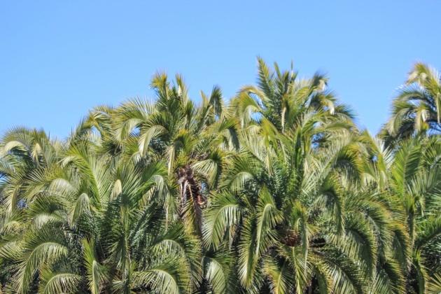 palms-2